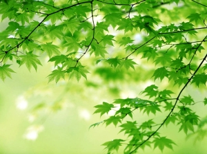 7676-green-grass-leaves