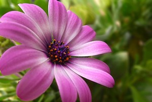 purple-flower-1378227891t6B