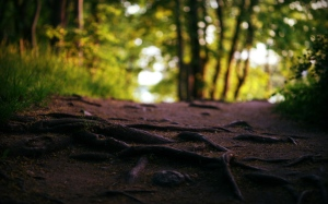 roots_trees_textures_path_wood_earth_55940_3840x2400